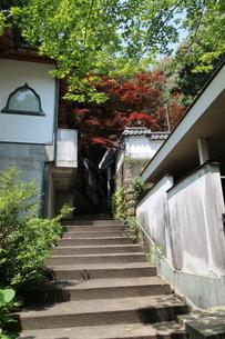 紅葉の小道の階段の写真素材 [FYI01274105]