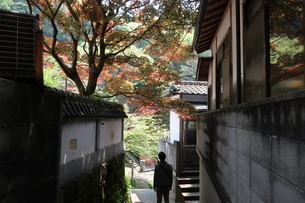 紅葉の小道を歩く男性の写真素材 [FYI01274133]