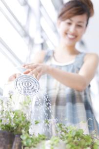 ハーブに水をあげる女性の写真素材 [FYI01276249]