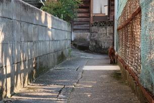 小道を歩く猫の後ろ姿の写真素材 [FYI01276394]