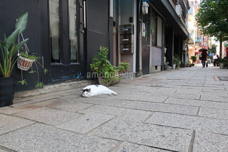 道端で寝そべる猫の写真素材 [FYI01276441]