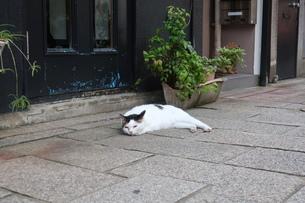 道端で寝そべる猫の写真素材 [FYI01276472]