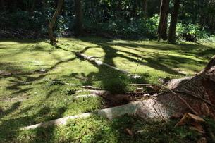 苔むした木陰の写真素材 [FYI01277177]