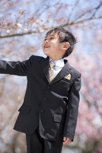 桜の下に立っている男の子の写真素材 [FYI01277717]