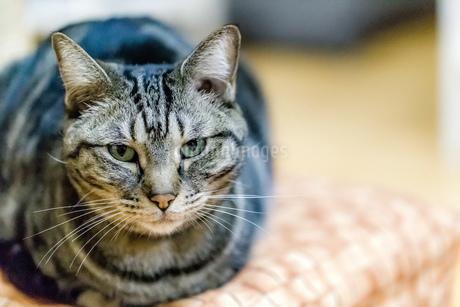 ネコの写真素材 [FYI01277855]