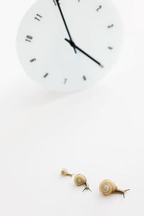 カタツムリ親子と時計の写真素材 [FYI01278109]