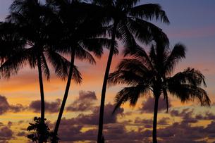 夕焼けとヤシの木のシルエットの写真素材 [FYI01278466]