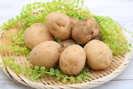 ジャガイモの写真素材 [FYI01279638]