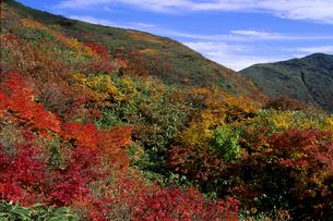 秋の巻機山の写真素材 [FYI01280344]