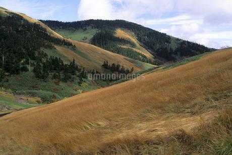 秋の巻機山の写真素材 [FYI01280391]