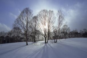 雪原と樹木の写真素材 [FYI01280636]
