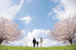 桜の木の間を歩く親子の写真素材 [FYI01280910]