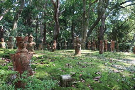 苔むした森の木陰に並んだ埴輪の写真素材 [FYI01281086]