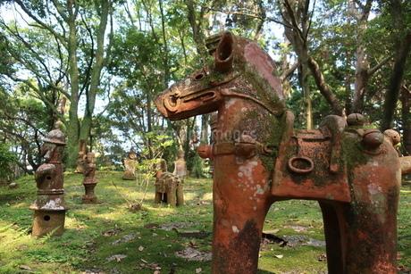 苔むした森の木陰に並んだ埴輪の写真素材 [FYI01281109]