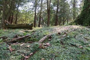 苔むした森の木陰の写真素材 [FYI01281131]
