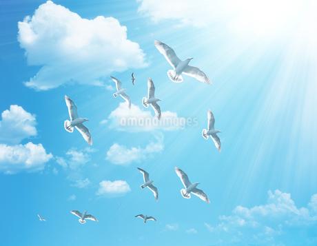 青空を飛ぶ鳥の群衆のイラスト素材 [FYI01282466]