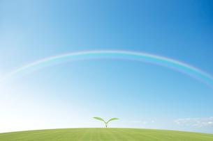 芝生の新芽と虹のイラスト素材 [FYI01282467]
