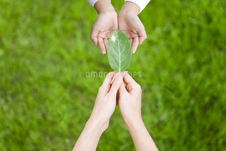 子供に葉を渡す女性の手元の写真素材 [FYI01282922]