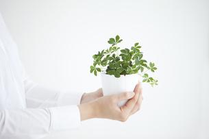 観葉植物を持った女性の手の写真素材 [FYI01283270]