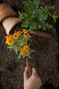 苗を植える手の写真素材 [FYI01283327]