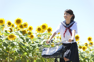 自転車に乗っている女子学生とヒマワリ畑の写真素材 [FYI01284739]