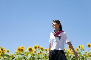 両手を広げる笑顔の女子学生とヒマワリ畑の写真素材 [FYI01285060]