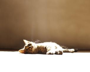 日向ぼっこしている子ネコの写真素材 [FYI01285820]