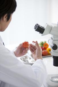 トマトの遺伝子組み換え実験をする男性研究者の写真素材 [FYI01286534]