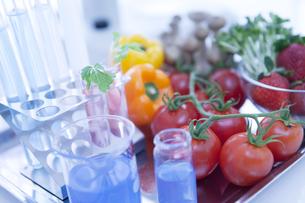 実験器具と食べ物の写真素材 [FYI01286892]