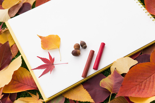 複数の葉とスケッチブックの写真素材 [FYI01287489]