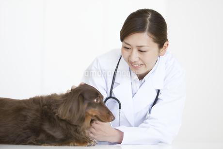 犬の診察をする獣医の写真素材 [FYI01288000]