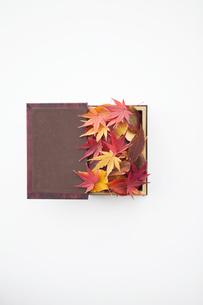 箱に詰められた落ち葉の写真素材 [FYI01288299]