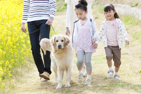 歩く4人家族と犬の写真素材 [FYI01288988]