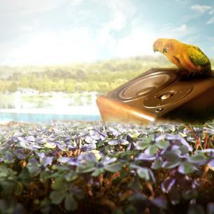 花畑と鳥2羽のイメージのイラスト素材 [FYI01292300]