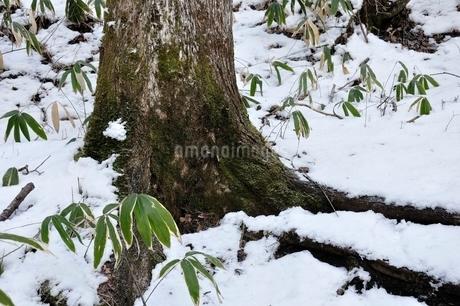 雪の山地の写真素材 [FYI01292499]