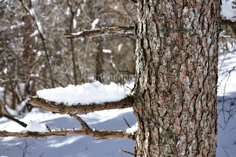 枝の雪の写真素材 [FYI01292519]
