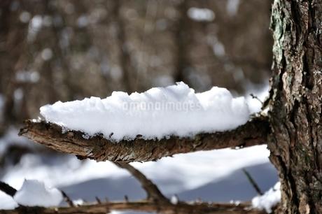 枝の雪の写真素材 [FYI01292521]