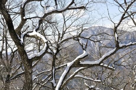 雪の木と御正体山の写真素材 [FYI01292539]