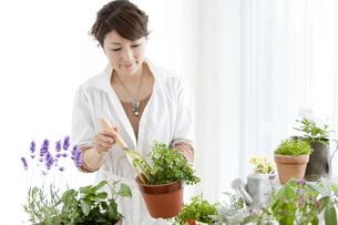 植物を植えている女性の写真素材 [FYI01294260]