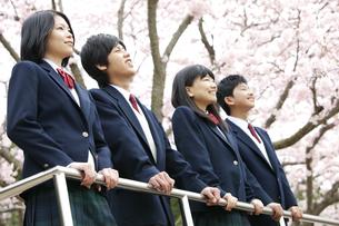 男女学生4人の写真素材 [FYI01294295]
