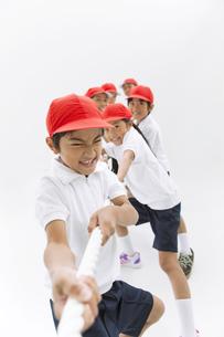綱を引く体操服姿の小学生の写真素材 [FYI01295054]