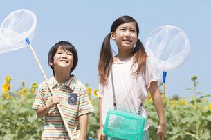 ひまわり畑で昆虫採集する姉弟の写真素材 [FYI01299873]