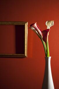 花と額縁の写真素材 [FYI01300923]