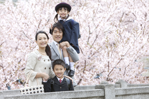 桜と笑顔の4人家族の写真素材 [FYI01303215]