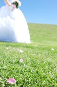 芝生の上の花びらと新婦の写真素材 [FYI01304432]