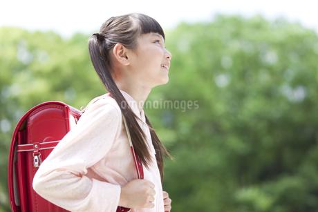 ランドセルを背負った女の子の写真素材 [FYI01307475]