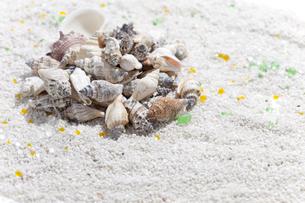 貝殻がある砂浜イメージの写真素材 [FYI01308082]