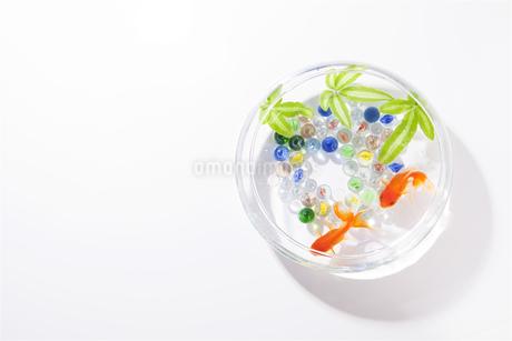 金魚がいる夏イメージの写真素材 [FYI01308315]