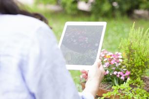 PCタブレットで花を撮影する女性の写真素材 [FYI01313059]