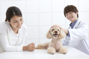 犬と飼い主と獣医の写真素材 [FYI01316571]